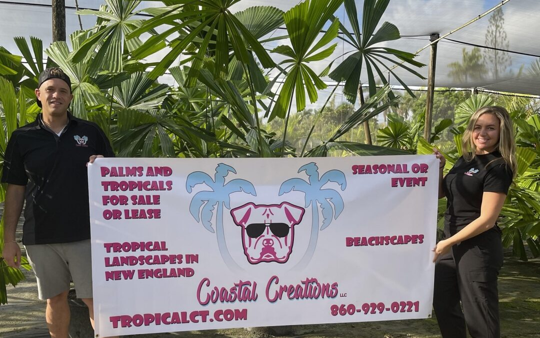 Palm Trees & Tropical Plants for Sale or Lease in Connecticut | Tropical Landscapes & Beachscapes in Connecticut